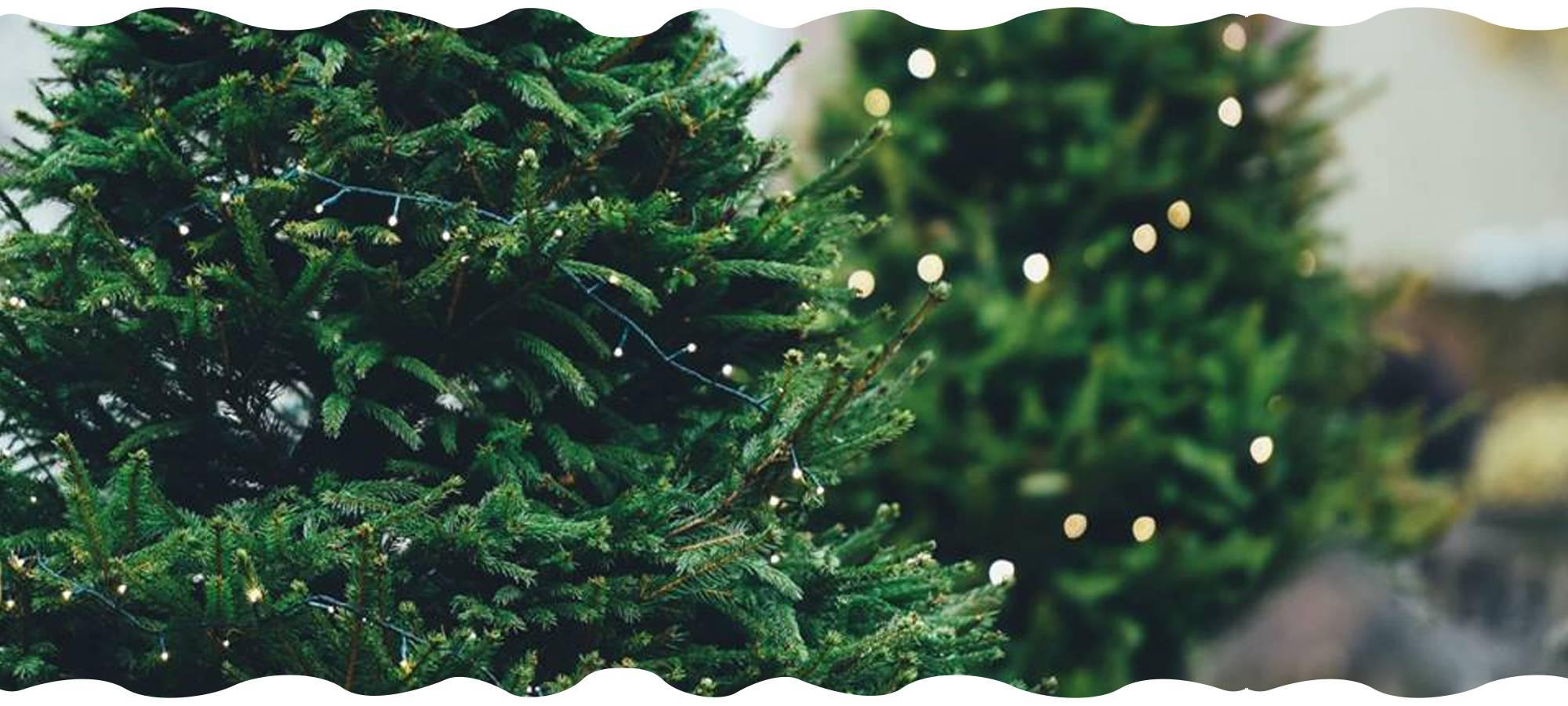 christmas-tree-campaign-gardencenternews-header
